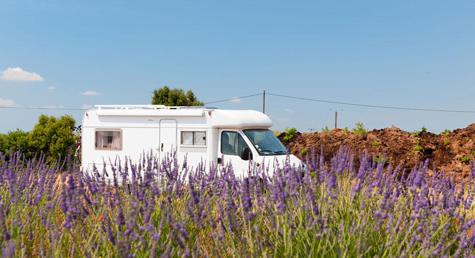 Camper Frankreich Lavendelfeld