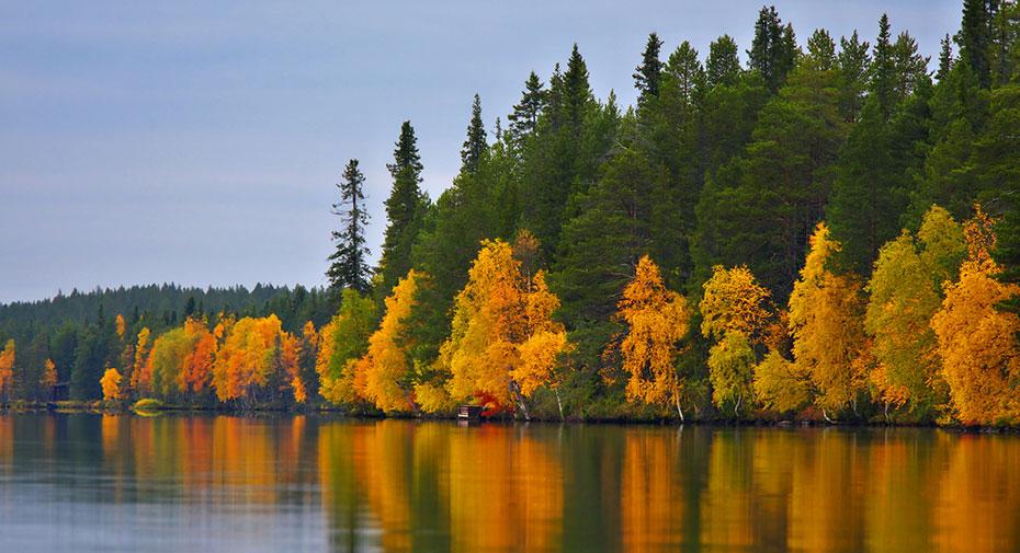 Finnland Camping herbst wald